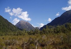 t_NZ3.jpg